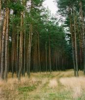 Walddrehna-Pilzheide